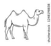 outline camel icon. hand drawn... | Shutterstock .eps vector #1248198838