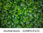 the leaves are leafy. green leaf | Shutterstock . vector #1248515122