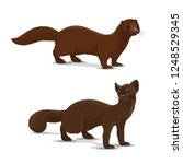 mink and sable dark colored... | Shutterstock .eps vector #1248529345