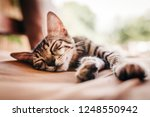 Stock photo cute tiny young cat laying and sleeping on a brown vintage couch 1248550942