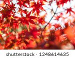 selective focus of maple leaf... | Shutterstock . vector #1248614635