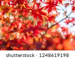 selective focus of maple leaf... | Shutterstock . vector #1248619198