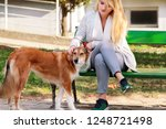 Stock photo beautiful girl with his shetland sheepdog dog sitting and posing in front of camera on wooden bench 1248721498