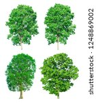 tree set collection isolated on ... | Shutterstock . vector #1248869002