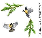 set of christmas bird photos of ...   Shutterstock . vector #1248920242