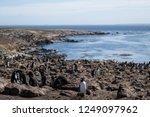 view of rockhopper penguin...   Shutterstock . vector #1249097962