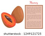 mamey exotic juicy fruit whole... | Shutterstock .eps vector #1249121725