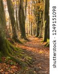 beech tree lined footpath  part ... | Shutterstock . vector #1249151098