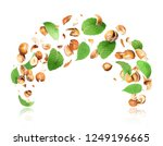 cracked hazelnuts with leaves... | Shutterstock . vector #1249196665