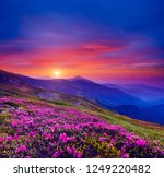 pink flower rhododendrons at... | Shutterstock . vector #1249220482