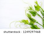 fresh chayote leaf on white... | Shutterstock . vector #1249297468