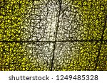 mesh with brightness | Shutterstock . vector #1249485328