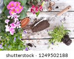 top view on a shovel filled... | Shutterstock . vector #1249502188