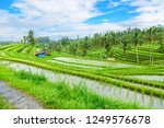 jatiluwih rice terraces  bali ...   Shutterstock . vector #1249576678