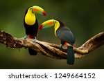 Toucan sitting on the branch in ...