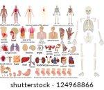 big vector set of an internal... | Shutterstock .eps vector #124968866