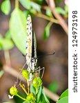 beautiful butterfly on flower... | Shutterstock . vector #124973198