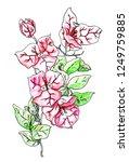 pink bougainvillea flower.... | Shutterstock . vector #1249759885