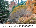 trees changing color from green ... | Shutterstock . vector #1249806958