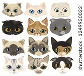 Stock vector set of cats face collection of cartoon kittens of different colors playful pets lovely colored 1249920022