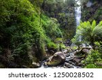 Erskine Falls Surrounded With...