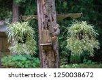 Squirrel Next To A Bird Feeder...