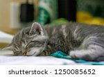 Cute And Very Young Kittens Ar...