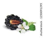 fresh  sweet and tasty... | Shutterstock .eps vector #1250091295