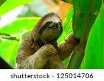 Sloth In Puerto Viejo  Costa...