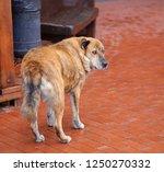 photo macro portrait of a big...   Shutterstock . vector #1250270332