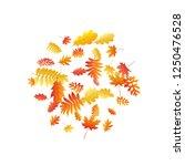 oak  maple  wild ash rowan... | Shutterstock .eps vector #1250476528
