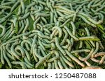 the silkworm is the larva or... | Shutterstock . vector #1250487088
