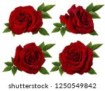 Stock photo fresh beautiful red rose with dewdrops isolated on white background with clipping path 1250549842