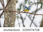 Tit On A Branch. Winter. Forest