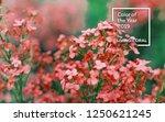 spring branch of blossoming...   Shutterstock . vector #1250621245