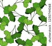 vector green ginkgo leaf. plant ... | Shutterstock .eps vector #1250744068