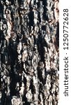 trunk tree background trunk... | Shutterstock . vector #1250772628