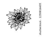 sunflower hand drawn vector... | Shutterstock .eps vector #1250816605