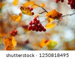 abstract background of colorful ...   Shutterstock . vector #1250818495