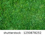 Green grass texture for...
