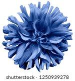 blue flower dahlia  on a white  ...   Shutterstock . vector #1250939278