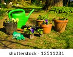 planting of pansies | Shutterstock . vector #12511231