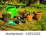 planting of pansies | Shutterstock . vector #12511231