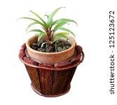 cordyline fruiticosa  a small... | Shutterstock . vector #125123672