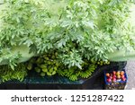 aerial view on the counter with ... | Shutterstock . vector #1251287422