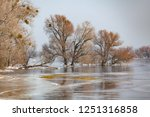 trees in flooded and iced... | Shutterstock . vector #1251316858
