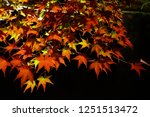 autumn vibes in kansai  kyoto... | Shutterstock . vector #1251513472