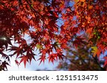 autumn vibes in kansai  kyoto... | Shutterstock . vector #1251513475