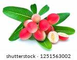mango lime booze on white...   Shutterstock . vector #1251563002