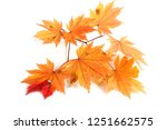 autumn maple leaves | Shutterstock . vector #1251662575